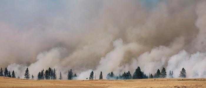 wildfire1 blog 700x300